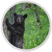 Black Bear Yearling Round Beach Towel