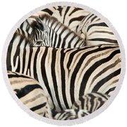 Burchells Zebras Equus Quagga Round Beach Towel