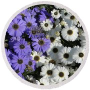 Cineraria Round Beach Towel