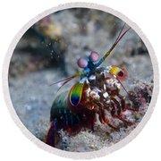 Close-up View Of A Mantis Shrimp, Papua Round Beach Towel