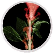 Cockscombs Flower, X-ray Round Beach Towel