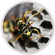 Common Wasp Vespula Vulgaris Round Beach Towel