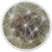 Dandelion Close-up. Round Beach Towel