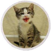 3 Day Old Kitten Round Beach Towel