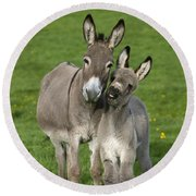 Donkey Mother And Young Round Beach Towel