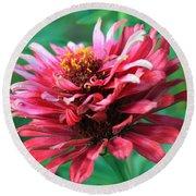 Fuchsia Pink Zinnia From The Whirlygig Mix Round Beach Towel