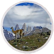 Guanacos In Torres Del Paine Round Beach Towel