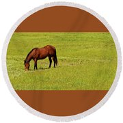 Horse Grazing Round Beach Towel
