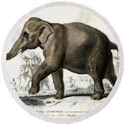 Indian Elephant, Endangered Species Round Beach Towel