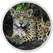 Jaguar Panthera Onca, Pantanal Round Beach Towel