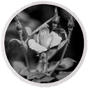 Knockout Roses Painted Bw Round Beach Towel