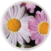 Marguerite Daisy Named Petite Pink Round Beach Towel