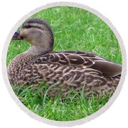 New Zealand - Female Mallard Duck Round Beach Towel