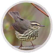 Northern Waterthrush Round Beach Towel