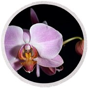 Pink Orchid V Round Beach Towel