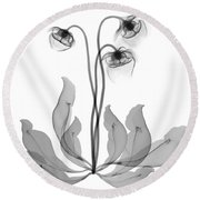 Pitcher Plant Flowers, X-ray Round Beach Towel