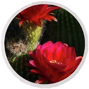 Red Torch Cactus  Round Beach Towel