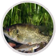 Rock Bass Round Beach Towel