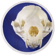 Skull Of A River Otter Round Beach Towel