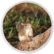 3- Squirrel Round Beach Towel