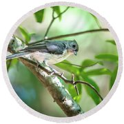 Tufted Titmouse In The Wilds Of South Carolina Round Beach Towel