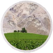 Vines In The Atacama Desert Chile Round Beach Towel