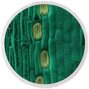 Wheat Leaf Stomata, Sem Round Beach Towel