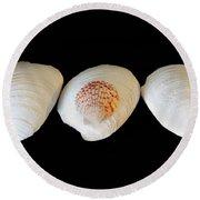 3 White Shells Round Beach Towel