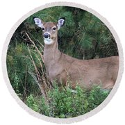 White Tailed Deer Calverton New York Round Beach Towel