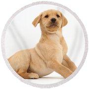 Yellow Labrador Retriever Puppy Round Beach Towel