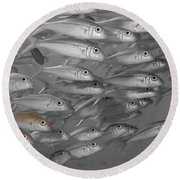 Yellowfin Goatfish Round Beach Towel
