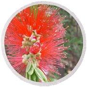 Australia - Red Callistemon Flower Round Beach Towel