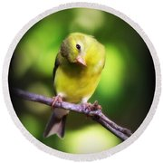 3008 - Goldfinch Round Beach Towel