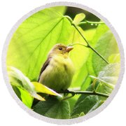 3154 - Tanager Round Beach Towel
