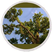 3256 Photography Forest Scene  Round Beach Towel