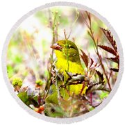 3395 - Tanager Round Beach Towel
