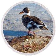 Duck Round Beach Towel