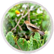 3546 - Tanager Round Beach Towel