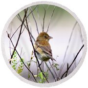 3571 - Tanager Round Beach Towel