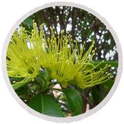 Australia - Pollinating A Green Leionema Flower Round Beach Towel