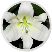White Lily Round Beach Towel