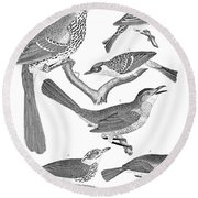 American Ornithology Round Beach Towel