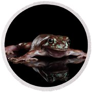 Australian Green Tree Frog, Or Litoria Caerulea Isolated Black Background Round Beach Towel