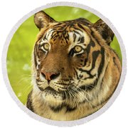 Bengal Tiger Round Beach Towel
