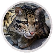Clouded Leopard Round Beach Towel