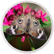 Common Buckeye Junonia Coenia Round Beach Towel