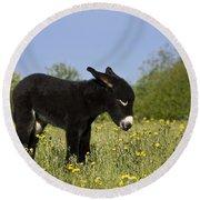 Donkey Foal Round Beach Towel