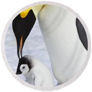 Emperor Penguin And Chick Round Beach Towel