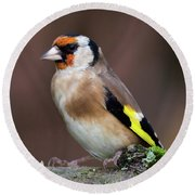 European Goldfinch Bird Close Up   Round Beach Towel