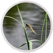 Four-spotted Chaser Round Beach Towel